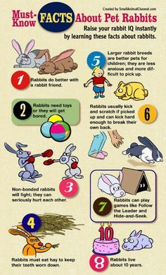 Rabbit cheat sheet