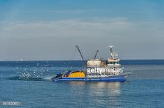 Sea Gulls following a shipping boat off the shores of Barbaros... #tekirdag: Sea Gulls following a shipping boat off the shores… #tekirdag