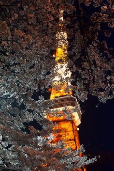Tokyo Tower covered by the Cherry Blossoms in Japan via flickr