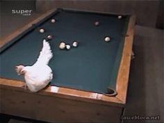 Chicken lays a good shot.