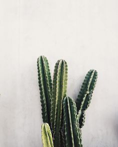 collagevintage: #lovecactus #collageontheroad (en Melrose Avenue)