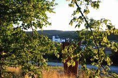 Vineyard, Fruit, Plants, Outdoor, Outdoors, Flora, Vineyard Vines, The Great Outdoors, Plant