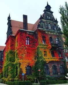 """steampunktendencies: """"Incredibly couloured ivy on National Museum in Wroclaw, Poland taken by Anna Kowalów. """""""