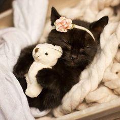 Resultado de imagem para newborn kitten photo shoot