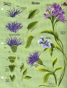 One stroke painting · Herbs RTG Worksheet for Binder by Donna Dewberry Face Painting Designs, Painting Patterns, Fabric Painting, Painting & Drawing, Watercolor Paintings, Face Paintings, Tole Painting, Painting Flowers, Draw Flowers