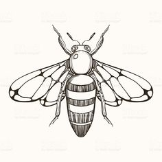 15 best bee line art images images line art images bees bee Albino Bee hand drawn engraving sketch of bee vector illustration for tat royalty free stock vector