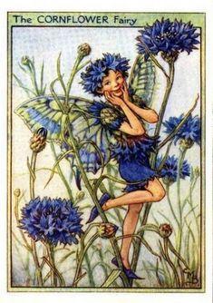 Cornflower Flower Fairy » Flower Fairy Prints- Vintage Fairy Prints by Cicely Mary Barker Kobold, Cicely Mary Barker, Fairy Dust, Fairy Land, Fairy Tales, Blue Fairy, Flower Fairies, Fairies Garden, Corn Flower