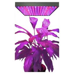 Suitable for All Kinds of Plant, Professional spectrum ratio: the most suitable ratio for seeds and leaf growing, you can see more rows after using the lamp.