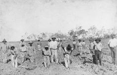 South Sea Islanders planting sugar cane at Seaforth Plantation at Ayr, Queensland   Flickr - Photo Sharing!