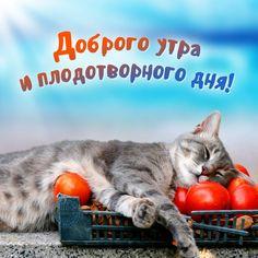🎀Доброе утро всем!☀️ Впереди плодотворная неделя!😍