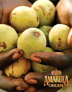 Amarula - South Africa!...once these amarula fruit would fall of the tree and rot on the ground, elephants would eat them and get tipsy... True story