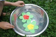 eksperyment lilie wodne