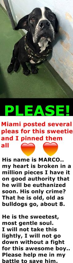 RESCUED --- Someone please give him a loving home to live out his last few years#A1702593 at Miami Dade Animal Services https://www.facebook.com/urgentdogsofmiami/photos/pb.191859757515102.-2207520000.1433716840./988688514498885/?type=3&theater