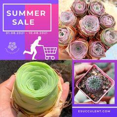 August 2021 Succulent Summer Sale Buy Succulents Online, Succulents For Sale, Rare Succulents, Planting Succulents, Best Indoor Plants, Plant Sale, Summer Sale, Houseplants, Garden Design