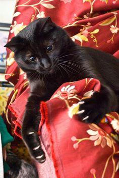 Gorgeous black cat