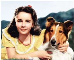 The film 'Lassie Come Home',  began Elizabeth Taylor's life long love affair with dogs.
