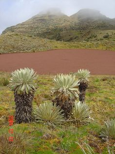 Colonial, Palmiers, Belleza Natural, Fauna, Continents, Portuguese, Ecuador, South America, Africa