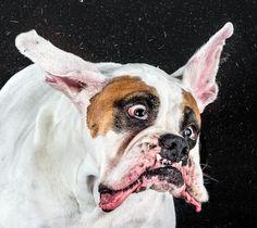 Dogs in Motion - Carli Davidson