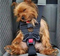13 cachorrinhos que dormem em qualquer lugar — mas em qualquer lugar mesmo! - Mega Curioso