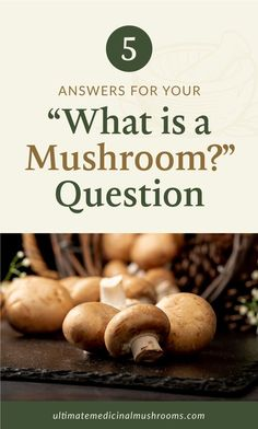 If you've been enjoying the wonderful flavors of medicinal mushrooms, then you've probably come to a point where you wondered just what these delightful fungi are. This article will give you some pretty swell answers to all your What is a Mushroom questions. Check this out today and find out more about this wonderful gift of nature. | Discover more about medicinal mushrooms at ultimatemedicinalmushrooms.com #mushroomidentification #medicinalmushrooms #mushroombenefits Mushroom Identification, Mushroom Benefits, Mushroom Hunting, Fungi, Stuffed Mushrooms, This Or That Questions, Vegetables, Pretty, Gift
