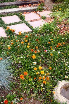 Gazanias – als wat jy moet weet - education Landscape Design, Garden Design, Different Types Of Flowers, Moon Garden, Garden Projects, Garden Ideas, Drought Tolerant Plants, Garden Buildings, Garden Inspiration