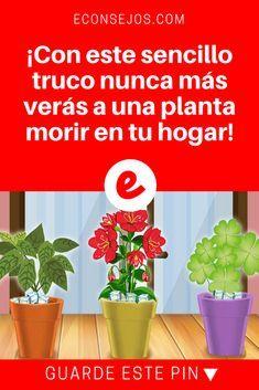 Regar plantas | ¡Con este sencillo truco nunca más verás a una planta morir en tu hogar! | Solamente se sentará a verlas florecer.