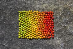 Pretty rainbow of apples