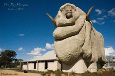 The Big Merino - Goulburn, NSW.  Built in 1985 as a monument to Goulburn's fine wool industry it stands 15.2m high, 18 metres long and weighs in at 97 tonnes.