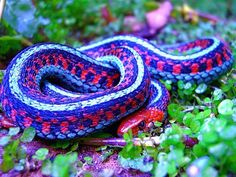 """"""" Snakes is a beautiful animals but I am scared of 🐍🐍🐍🐍🐍🐍🐍🐍 colorful-snakes-lizards"""" Pretty Snakes, Cool Snakes, Colorful Snakes, Beautiful Snakes, Colorful Animals, Cute Animals, Cute Reptiles, Reptiles And Amphibians, Beautiful Creatures"""