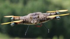 cameliapr: Convirtió en dron a su gato muerto y ahora quiere ...