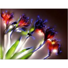 "kirlian photograph of Flowers showing how the electrical tendrils of the ""Aura"" erupt from the tips of the flower"