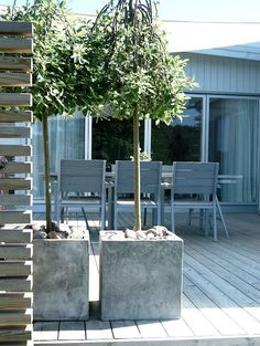 love the trees + concrete planters on deck Outdoor Rooms, Outdoor Gardens, Outdoor Living, Outdoor Furniture Sets, Outdoor Decor, Landscape Design, Garden Design, Outside Living, Concrete Planters