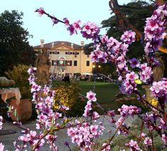 Villa Selmi a Pasqua
