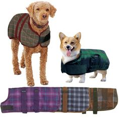 Centaur Dog Blanket - Size:26 Color:Orchid Plaid *** See this awesome image  (This is an amazon affiliate link. I may earn commission from it)