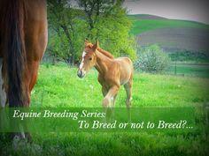Great information on breeding horses