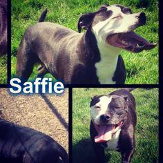 Saffie is desperately looking for rescue! #safeandsound #rescue #rescuedog #dontshopadopt #dog #newlife #happy #love #givesomuch #giveadogachance #somanyneedanewhome #adoption #pet #beautiful #bestfriend #mansbestfriend www.safe-and-sound.org