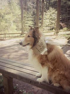 I Do Too Boy Bowtie Dog Collar Bandana Rustic Natural Burlap Wedding Photo Prop on Etsy, $20.00