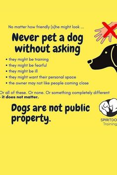 Different Dogs, Personal Space, Training Your Dog, Pets, Animals And Pets