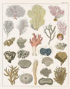 Oken Fish & Shell Prints