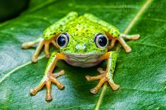 Brother Frog calls attention to our emotions. http://transformationalstudies.com/shamanic_apprenticeship