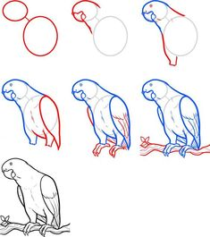 How To Draw A Parrot How To Draw Parrot In Easy Steps Drawing Tutorial - Drawing Pencil Sketch Bird Drawings, Easy Drawings, Animal Drawings, Pencil Drawings, Drawing Birds, Horse Drawings, Drawing Lessons, Drawing Techniques, Art Lessons