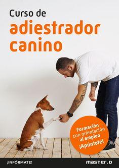 ¿Te apasionan los perros? ¿Te gustaría conocerlos para trabajar con ellos? Entonces nuestro curso de adiestramiento y educación canina es lo que estás buscando. ¡Te informamos! Searching
