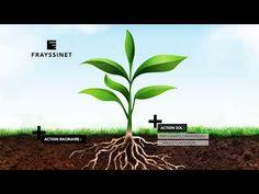 Programme Nutrition et Stimulation Frayssinet #InfoWebVitivinicole Action, Root System, Plant, Group Action