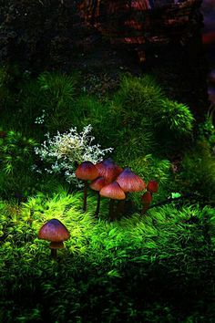 Gorgeous Mushrooms and moss