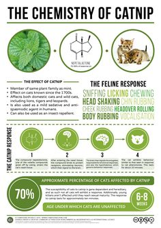 """Chemistry of Catnip and other Everyday Chemical Compounds with """"Compound Interest"""""""