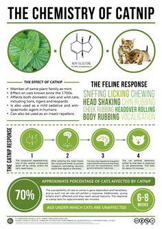 The Chemistry of Catnip