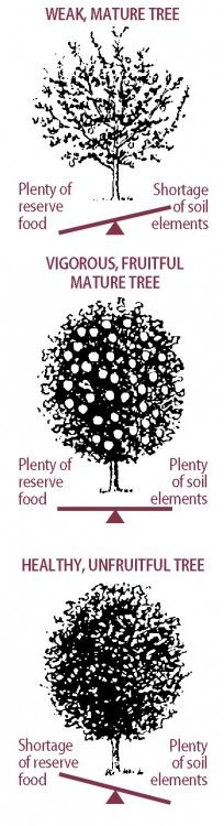 Fruit Tree Blooming and Bearing Problems – And How to Solve Them!