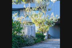 fb_country-coastal_189 Australian Garden Design, Australian Native Garden, Australian Plants, Green Terrace, Terraced Backyard, Coastal Gardens, Country Landscaping, Low Maintenance Garden, Plant Design