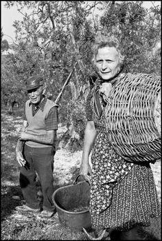 Chianti fiorentino, settembre 1970 Una vendemmia del secolo scorso - The harvest of the last century #TuscanyAgriturismoGiratola