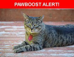 Please spread the word! Vienna was last seen in Kirkland, WA 98034.    Nearest Address: Near 119th Ave NE & NE 153rd St